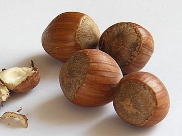 thumb_nuts-74362_640